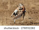 two ground squirrels  xerus... | Shutterstock . vector #278552282