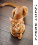Cute Beautiful Red Cat