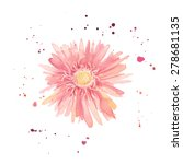Watercolor Gerbera. Single...
