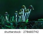 Small Mushrooms Toadstools...