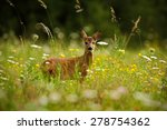 Beautiful Blooming Meadow With...