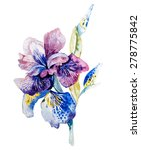 Flower Of Iris Drawing By...