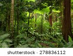 rainforest  queensland ... | Shutterstock . vector #278836112