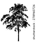tree  flower benjamin   ficus... | Shutterstock .eps vector #278960726