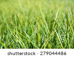 Bright Green Grass Background....