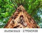 giant sequoia trees | Shutterstock . vector #279065438