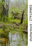 foggy overgrown swamp or marsh... | Shutterstock . vector #279139802