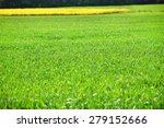green grass field    Shutterstock . vector #279152666