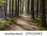 Path In Sunny Forest With...