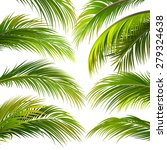 palm leaves isolated on white.... | Shutterstock .eps vector #279324638