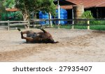 horse rolling around in the... | Shutterstock . vector #27935407