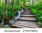summer forest pathway in... | Shutterstock . vector #279474842