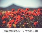 Field Of Wild Poppy Flowers....