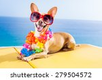 chihuahua dog under the shadow... | Shutterstock . vector #279504572