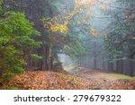 Fog In Rainy Forest  Autumn...