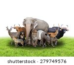 group of asia animals with... | Shutterstock . vector #279749576