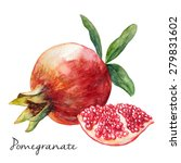 hand drawn pomegranate ... | Shutterstock .eps vector #279831602