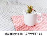 beautiful succulent in a cup | Shutterstock . vector #279955418