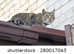 Stock photo cat climbed high on the roof of the house 280017065