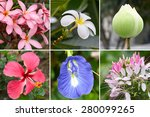 tropical flower collection | Shutterstock . vector #280099265