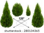 Bush  Thuja. Isometric Trees I...