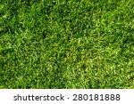 Field of fresh green grass...