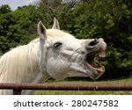 Stock photo silly white horse with mouth open facing right 280247582