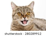 british cat licks his lips and... | Shutterstock . vector #280289912