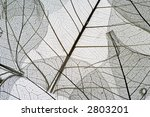dried leaves | Shutterstock . vector #2803201