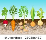 garden with root vegetables ... | Shutterstock .eps vector #280386482