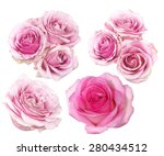 pink roses isolated on white  | Shutterstock . vector #280434512