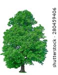 old linden tree with green... | Shutterstock . vector #280459406