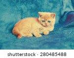 Stock photo cute kitten on blue blanket 280485488