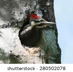 Pileated Woodpecker Sticking...