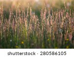 Long Grass Meadow At Sunrise...