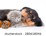 Stock photo sleeping rottweiler puppy hugging cute kitten isolated on white background 280618046
