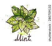 sketch green organic mint... | Shutterstock .eps vector #280709132
