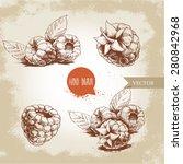 hand drawn raspberry set... | Shutterstock .eps vector #280842968