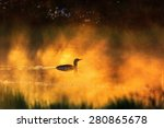 Red Throated Loon In Silluette...