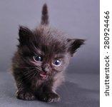 small black  kitten withs... | Shutterstock . vector #280924466