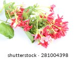 quisqualis indica also known as ... | Shutterstock . vector #281004398