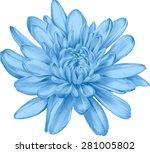 beautiful blue chrysanthemum... | Shutterstock .eps vector #281005802