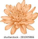 beautiful orange chrysanthemum... | Shutterstock .eps vector #281005886