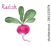 radish salad with leaf isolated ... | Shutterstock .eps vector #281122076