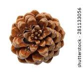Pinus Pinea  Stone Pine Cone...