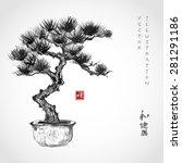 bonsai pine tree hand hand...