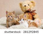 Stock photo cute kittens 281292845