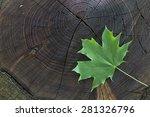 fresh green maple leaf on... | Shutterstock . vector #281326796