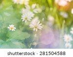 forrest blossoms | Shutterstock . vector #281504588