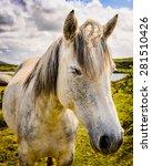 Quiet Grey Horse Standing In A...